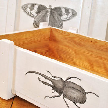 White vintage storage bin | flat ammo crate | retro end table | cargo crate | rustic nightstand box | insect print | nature | shabby chic
