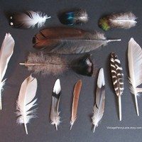 12 Foraged Cruelty Free Feathers, Alter, Crafting, DIY, Supplies, Wild Bird Feathers