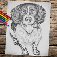 Adult Coloring Page, Printable coloring page, Instant download coloring, Spaniel coloring book page, coloring page, coloring book for adults