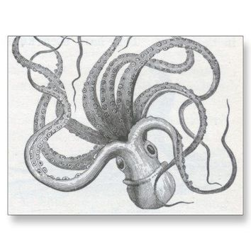Nautical steampunk octopus vintage design postcards from Zazzle.com