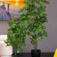 "Coco's Plantation 32"" Baby Schefflera Plant in Pot"