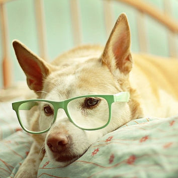 In Deep Thought - 5x7 Fine Art Photography Print - dog puppy pet portrait glasses mint green pastel cute home decor nursery photograph