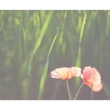 poppy photograph, poppy, red, coral, pink, green, field, summer, flower photograph, nature photography, color photography