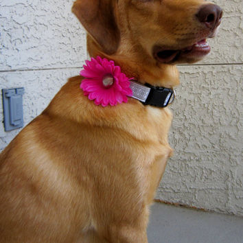 Gerber Daisy Dog Collar Flower Accessory- Pink, Lavendar, Orange
