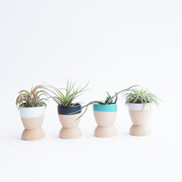 Mini Planters, Set of 4, Winter