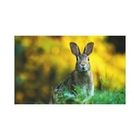 Custom Easter Rabbit Stretched Canvas Print Art