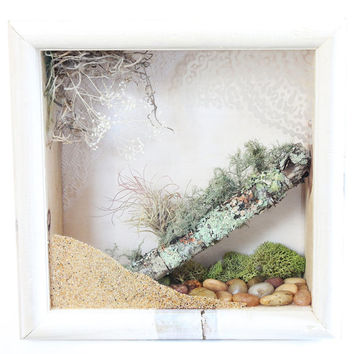 Gift for Home, Terrarium Wall Hanging, Terrarium Decor, Nature Decor, Natural Home Decor, Air Plant Planter, Wall Terrarium