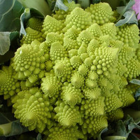 Broccoli Romanesco Vegetable Seeds (Brassica oleracea) 100+Seeds