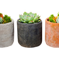 "5"" Succulent Arrangement Trio Kit, Seeds & Growing Kits"
