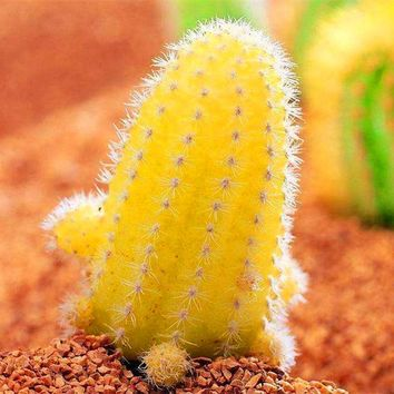 200 pcs/bag Real mini yellow cactus seeds rare succulent perennial herb plants bonsai pot flower seeds plant for home garden