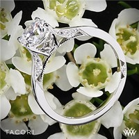 18k White Gold Tacori Dantela Crescent Motif Solitaire Engagement Ring