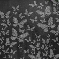 White Chalk Butterflies Printed Photo Backdrop / 2206