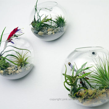 Wall Terrarium// Living Wall// Air Plant Terrarium// Home Decor// Green Gift