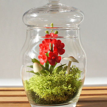 Tiny Vanda Orchid Terrarium by Miss Moss Gifts