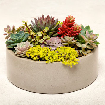 Large Concrete Planter, Concrete Bowl