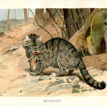 Wildcat Art Print, Felis silvestris, Cat, Antique Color Lithograph, Brehm Art, Chromolithograph