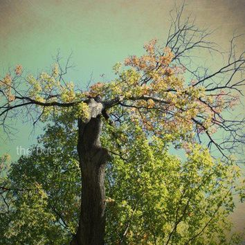 Green Tree of Mysticism 5x7 Photography Print Leaves by thebqe