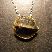 Baby Turtle Skeleton Shell Preserved Specimen Taxidermy Necklace