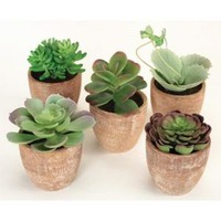Walmart: Pack of 10 Southwestern Mixed Green Succulent Plants in Terracotta Pots 7.5""