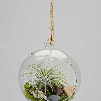 Makerskit DIY Hanging Air Plant Terrarium Kit- Brown One