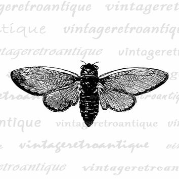 Cicada Insect Digital Image Download Illustration Graphic Printable Antique Clip Art Jpg Png Eps  HQ 300dpi No.3412