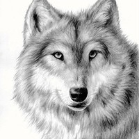 Wolf, pencil drawing limited edition print by ONETA