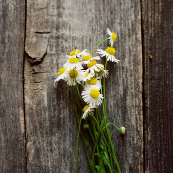 Rustic decor, botanical, wild flowers, french country, minimal art, still life, farmhouse decor, fine art photo, spring, romantic art, girly