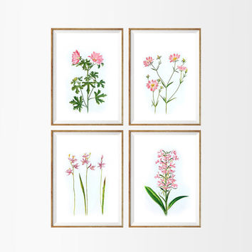 Wild Pink Flowers Art Print SET OF 4. A4 Size UNFRAMED. Floral Herbarium Home Wall Decor Botanical Buds Art. Antique Illustration Drawing