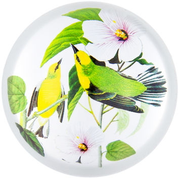 Blue-winged Warblers In Branches Glass Paperweight