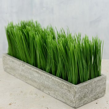 Rectangular Potted Wheat Grass Large