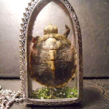 Tiny Baby Turtle Ossuary Preserved Specimen Taxidermy Necklace