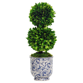"24"" Double Ball Boxwood in Planter, Blue, Outdoor Urns, Planters & Jardinieres"