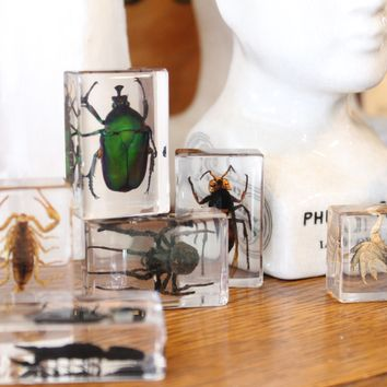 Small Invertebrate Paperweights