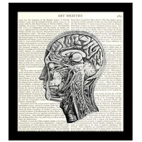 "Anatomy Dictionary Art Print 8"" x 10"" Inside Human Head Victorian Medical Science"