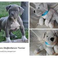 American STAFFORDSHIRE Terrier plush, soft toy staffordshire dog stuffed pet dog breeds individual from photo handmade animal MADE to ORDER