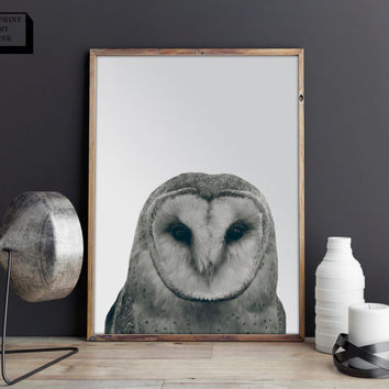 Owl print, animal print, bird print, owl poster, forest animal print, nursery animal print, forest wall art, owl decor, animal photo
