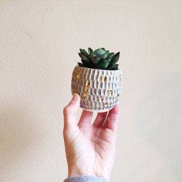 Succulent Planter with Gold - Modern Gold Decor - Small Planter