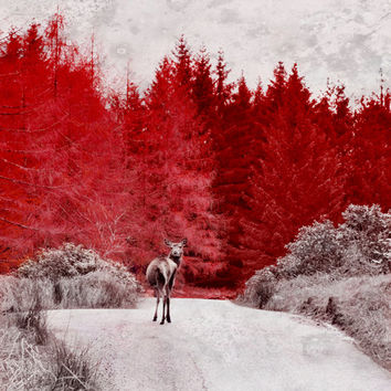 Red Abstract Art, Black and White, Red Tree, Scotland Photography, Deer Print, Abstract Landscape Wall Art - Red Forest