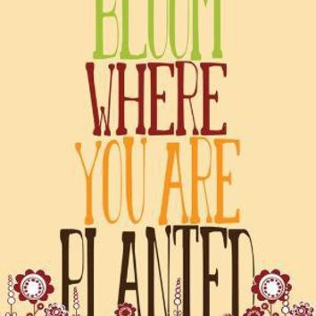 Bloom Where You Are Planted by ParadaCreations on Etsy