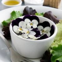 Edible Flower - Pansy - 4 x 50 Count