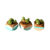 Turquoise Handmade Planters - Set of 3