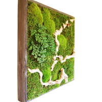 "Plant Painting- No Care Green Wall Art. Real Preserved Plants. 18 x 18"" Moss and Fern Art."
