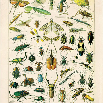 Vintage Insects Diagram Reproduction Print. Variety of Insects Educational Chart by Adolphe Millot Science Entomology Bugs creatures. CP255