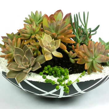 Concrete Planter with Succulents