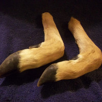 Deer Legs real animal bone weird taxidermy leg craft supply parts