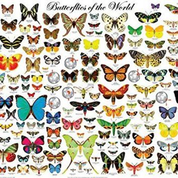 Butterflies of the World Poster 36 x 24in