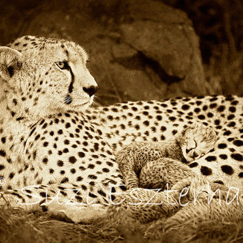 Vintage SNUGGLE BABY CHEETAH Photo, 8 X 10 Sepia Print, Baby Animal, Wildlife Photography, Wall Decor, Nursery Art, African Safari, Love
