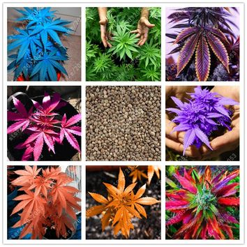 100 pcs/bag Japanese Rainbow Hemp Seeds Rare Flower Seeds Bonsai Hemp Plants seeds vegetables herb For Home Garden pot