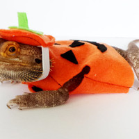 Bearded Dragon Clothing! Pumpkin!