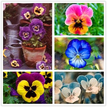100pcs/pack pansy seeds Mix Color Wavy Viola Tricolor Flower Seeds Free Shipping bonsai potted Plant for DIY home&garden